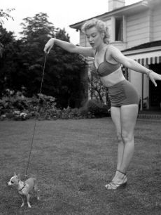 Marilyn and her Chihuahua. I too have  one pet Chihuahua.  Love Marilyn and my Chi.