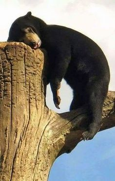 21 Photos Of Cute And Peaceful Sleeping Animals - Pets Impact Nature Animals, Animals And Pets, Baby Animals, Funny Animals, Cute Animals, Wild Animals, Animals Kissing, Wildlife Nature, Nature Nature