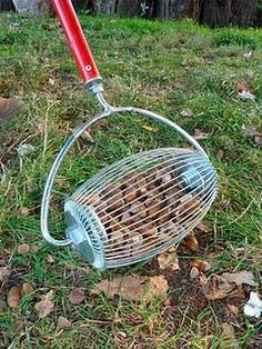 SHUT UP! A NUTBROOM! Why have I never heard of this! MUST HAVE for picking up all those walnuts / pecans in the yard! It is the year of the black walnut here on the farm.
