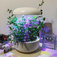 @sally0707 アトリエの玄関のミントとワイルドロケットがすっかり大きくなりました。暖かくなってきたのでミントウォーターにして飲もうかな。 #plantui #plantuismartgarden #家電アトリエ #神原サリー Plants, Plant, Planets