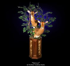 Best Taxidermy Mounts | Java Games Top Wallpapers Mms Category Color Screensavers Category ...