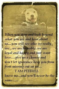 this is so true I was scared of pitbulls until I by stumbled on to owning one it true love of the breed now. never judge from what others say.
