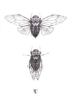 Cicada Illustration - A5 fine art print:
