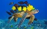 Underwater Animals | Free Desktop