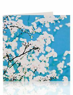 Apple Blossom Blank Greetings Card