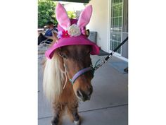 Clearance: Bunny Ears Easter Hat for Equines - Easter Horse Hat in Orange Yellow or Pink - Easter Rabbit Ears Bonnet Equine Hat Driving Cap, Mini Pony, Horse Costumes, Rabbit Ears, Pink Hat, Easter Celebration, Fabric Ribbon, Egg Hunt, Kentucky Derby