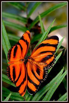 Orange butterflies www.figleaves.com #SS13TRENDS