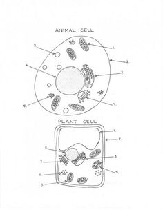 Plant and Animal Cell Diagram Worksheet | bio | Pinterest | Plants ...