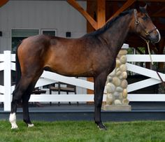 Proudly presented for auction at The Fall Classic Sale
