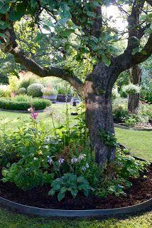 Trädgårdsflow Garden Planning, Garden Yard Ideas, Garden Beds, Garden Projects, Garden Landscaping, Tree Borders, Back Gardens, Small Gardens, Outdoor Gardens