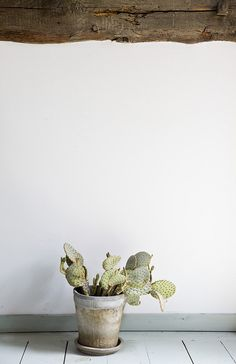 Tiny Potted Cactus In A Tiny Ceramic Pot + Painted Blue Wood Floor + Unfinished Raw Rood Beam = The Cutest Cactus