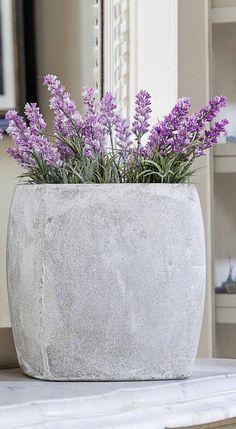¿Sabías que una planta puede desintoxicar tu casa, no sólo en la parte de…
