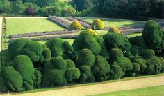 The Elephant Hedge at Rockigham Castle. I've stayed here--it's the inspiration for the manor house in Dickens's 'Bleak House,' and these hedges loom in the novel. 400 year old hedges, these. (Dickens was a friend of the family that owned the castle.)