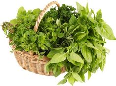 Home Garden Tip:Drying Herbs Quickly