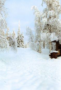 Landscape in Lapland, Finlandia #lapland #snow #Finland