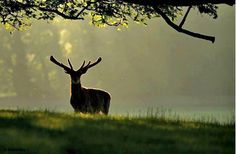 Majestic antlered king, stop awhile and we shall share the moment.,
