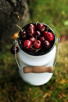 Fresh picked bucket of cherries for fresh eating or cherry pie or cobbler!  Sustainable! :)