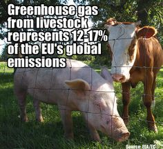 Greenhouse gases from livestock.