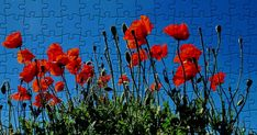 Tulips, Poppies, Free Online Jigsaw Puzzles, Wallpaper, Green, Flowers, Painting, Art, Wallpapers