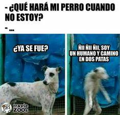 Mismo sabor diferente imagen #humor # Humor # amreading # books # wattpad Funny Animal Memes, Dog Memes, Cute Funny Animals, Funny Dogs, Funny Memes, Funny Spanish Memes, Spanish Humor, Best Funny Images, Pinterest Memes