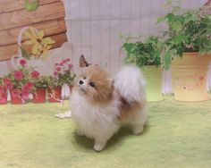 This needle felted Pomeranian is an adorable one of a kind wool sculpture, created with careful attention to detail. She is firmly felted and her entire