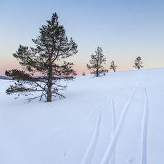 Hiihtelyä Pallaksella keskiyön auringon aikaan toukokussa Snow, Travelling, Outdoor, Outdoors, Outdoor Games, The Great Outdoors, Eyes, Let It Snow