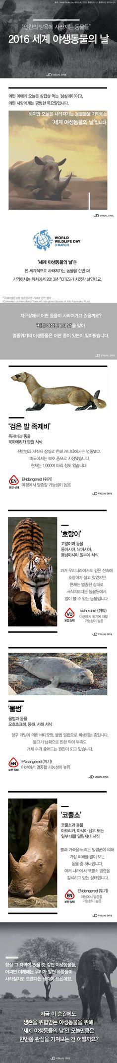 사라져가는 동물을 생각하는 '세계 야생동물의 날' [카드뉴스] #wildlife / #cardnews ⓒ 비주얼다이브 무단 복사·전재·재배포 금지