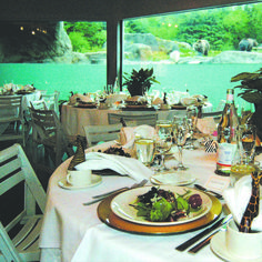 The grizzly bear exhibit in the Taiga Viewings Shelter makes an excellent backdrop for your wedding or rehearsal dinner. Entertain your guests as grizzly bears look on curiously and river otters zip through the water! #zoowedding #weddingvenue   zoo.org/planyourevent