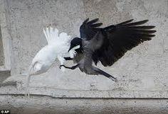 la paloma, el cuervo y la gaviota
