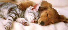 Une sieste à deux c'est mieux !