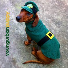 St Patricks Day Leprechaun Costume for Sausage Dogs