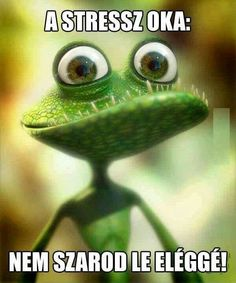 Frog-lizard Picture cartoon, lizard, frog) ★ Find more at… Frog Pictures, Pictures Images, Funny Pictures, Funny Pics, Hilarious, Funny Lizards, Funny Animals, Funny Frogs, Cute Monsters