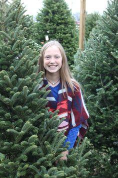 Christmas tree farm scenery