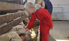 De schapen van boer Jan helpen verzorgen op FarmCamps Mariekerke. Hooi Hooi! Kids, Animals, Young Children, Boys, Animales, Animaux, Animal, Children, Animais