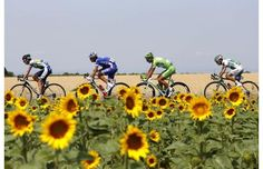 Say it with flowers: Daryl Impey, Jeremy Roy, Peter Sagan and Julien El Fares ride between Givors and Mont Ventoux. Stage 15 of the 2013 Tour de France. Chris Froome, Go Game, Tours France, Indoor Cycling, Pro Cycling, My Ride, Bicycle, Racing, Pictures