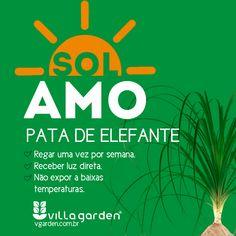 Villa Garden Plantas Indoor, Cactus Y Suculentas, Plantar, Green Gables, Green Life, Herb Garden, Botany, House Plants, Planting Flowers