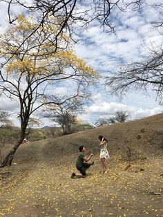 Proposal ideas. Paisaje Guayacanes Amarillos. Loja, Ecuador