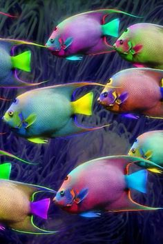 A school of beautiful, tropical fish... reminds me of sherbet ice cream ❤