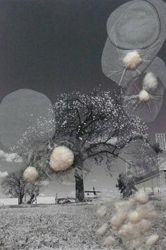 Celma Albuquerque | Nydia Negromonte