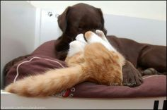 Hessel, you turn my world upside down!  #bloopermonday #hesselandhannes