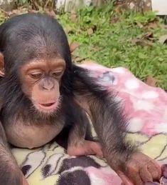 Baby Exotic Animals, Rare Animals, Cute Little Animals, Cute Funny Animals, Animals And Pets, Cute Dogs, Monkey Pictures, Funny Animal Pictures, Cute Baby Monkey
