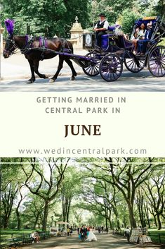 June is a lovely time of year to get married in Central Park. This is really the start of Summer in New York, but the heat and humidity that we sometimes have to deal with in high Summer has not… Wedding Reception Locations, Outdoor Wedding Venues, Indoor Wedding, Reception Ideas, Top Wedding Trends, Wedding Ideas, Wedding Decor, Wedding Stuff, Central Park Weddings