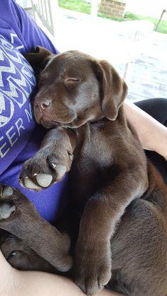 Precious puppy Bella