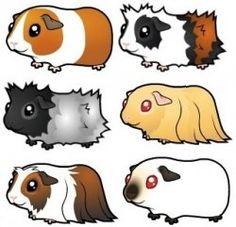 how to draw a guinea pig