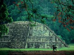 """The Maya ruins located at Copan in western Honduras are best known for their remarkable series of """"portrait stelae"""" These stelea and highly sculptured decorations of these buildings are indeed some of the very finest surviving art of ancient MesoAmerica https://twitter.com/ChichenItzaBob"""
