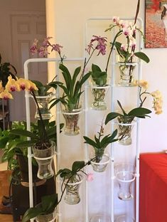 Orchids in water culture – Orchid care & Tips Water Culture Orchids, Orchids In Water, Indoor Orchids, Orchids Garden, Phalaenopsis Orchid, Water Plants, Flowers In Water, Potted Plants, Indoor Flowers