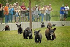 Cubs at Bear Country USA, South Dakota