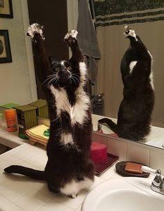 【情報】超愛舉前腳的怪怪喵星人 可愛模樣瞬間變網路紅貓 @幸福寵物交流區 哈啦板 - 巴哈姆特