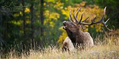 How To Hunt Elk On Your Own - Sole Adventure