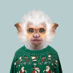 Zoo Portraits by Yago Partal. Animals dressed like humans.
